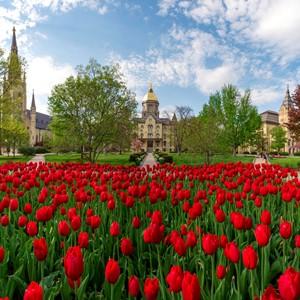 Main Building Tulips 3293 - Copy.JPG